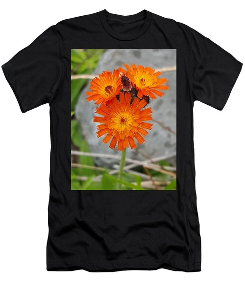 Orange Hawkweed Men's T-Shirt (Athletic Fit)