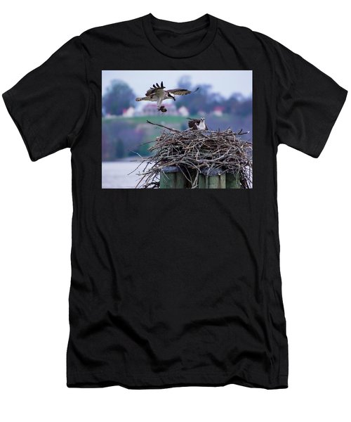 Osprey Nest Building Men's T-Shirt (Athletic Fit)
