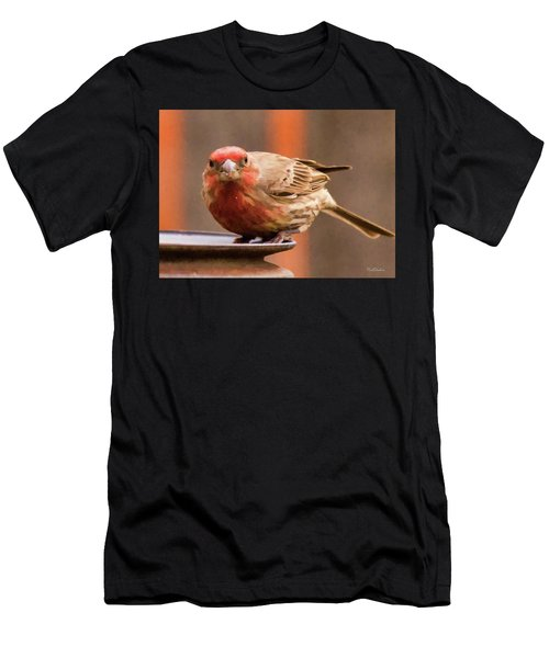 Painted Male Finch Men's T-Shirt (Athletic Fit)