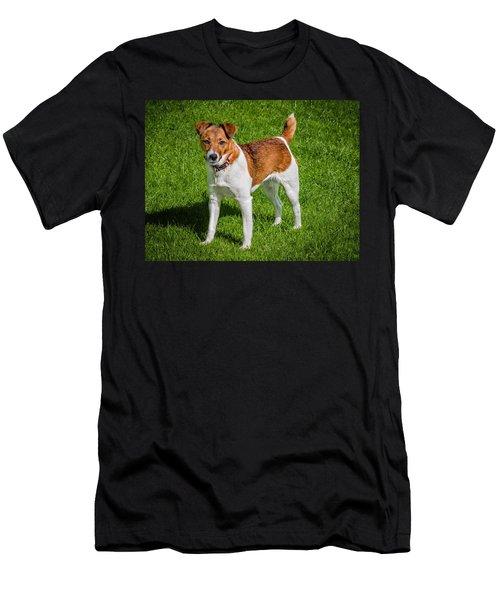 Parson Jack Russell Men's T-Shirt (Athletic Fit)
