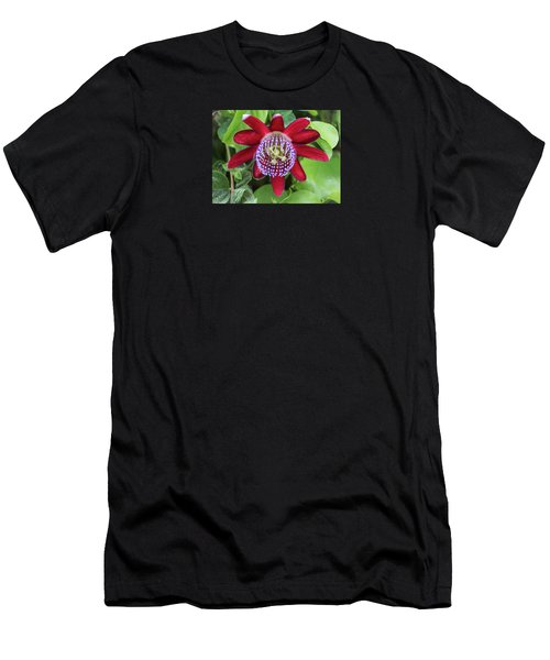 Passiflora Ruby Glow. Passion Flower Men's T-Shirt (Athletic Fit)