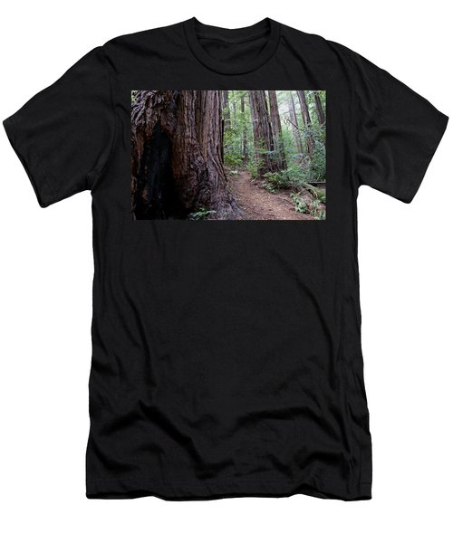 Pathway Through A Redwood Forest On Mt Tamalpais Men's T-Shirt (Athletic Fit)