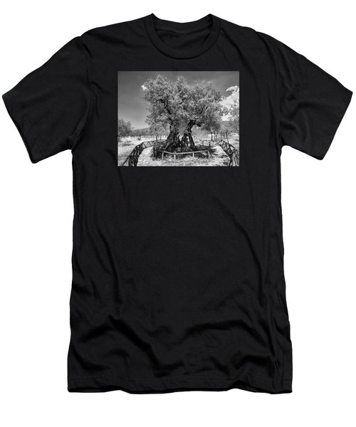 Patriarch Olive Tree Men's T-Shirt (Slim Fit) by Alan Toepfer