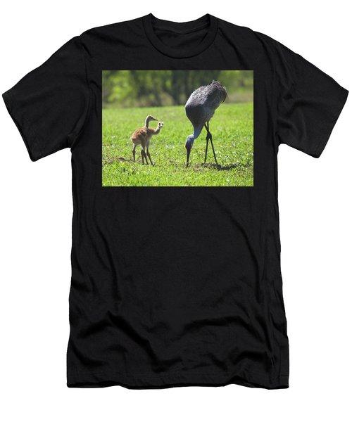Sandhill Cranes Men's T-Shirt (Athletic Fit)