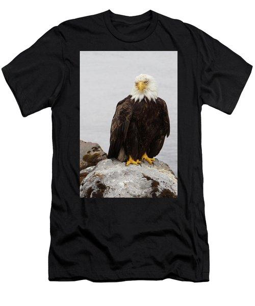 Perched Bald Eagle Men's T-Shirt (Athletic Fit)