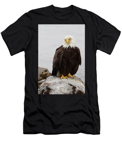 Perched Bald Eagle Men's T-Shirt (Athletic Fit)