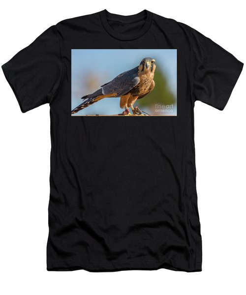 Peregrine Falcon Wildlife Art By Kaylyn Franks Men's T-Shirt (Athletic Fit)