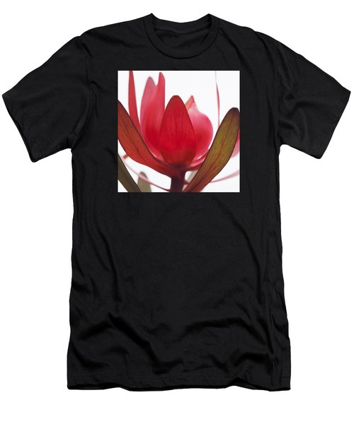 Petals Men's T-Shirt (Athletic Fit)