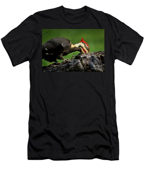 Pileated 3 Men's T-Shirt (Slim Fit) by Douglas Stucky