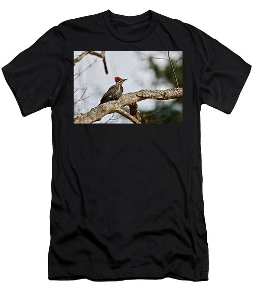 Men's T-Shirt (Slim Fit) featuring the photograph pileated Woodpecker 1068  by Michael Peychich