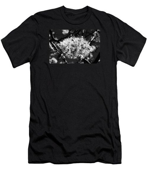 Plum Blossoms Men's T-Shirt (Athletic Fit)