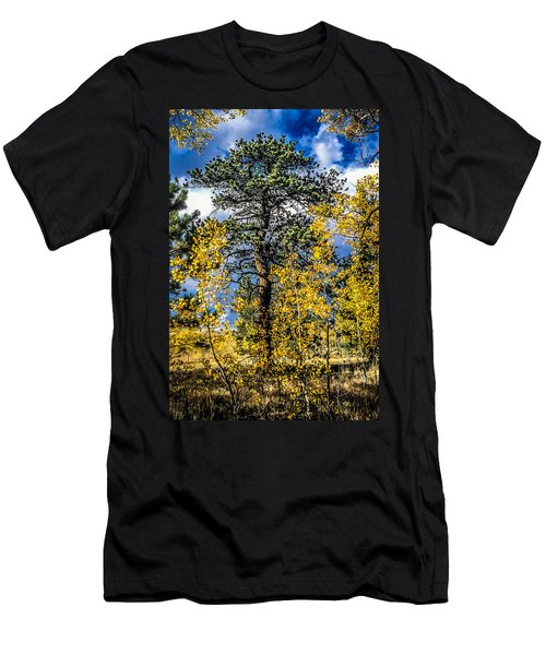 Ponderosa  Tree In The Aspens Of Fall Colorado Men's T-Shirt (Athletic Fit)