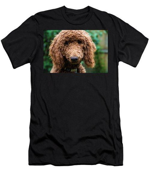 Poodle Pup Men's T-Shirt (Athletic Fit)