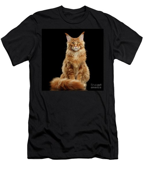 Portrait Of Ginger Maine Coon Cat Isolated On Black Background Men's T-Shirt (Athletic Fit)
