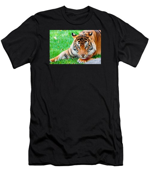 Pre-pounce Tiger Men's T-Shirt (Athletic Fit)