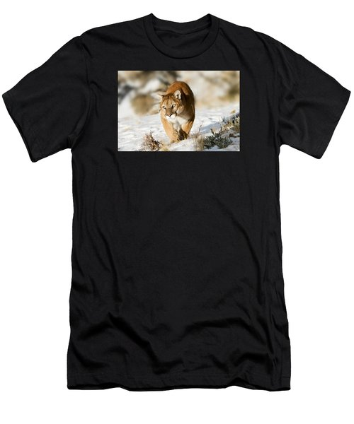 Prowling Mountain Lion Men's T-Shirt (Athletic Fit)