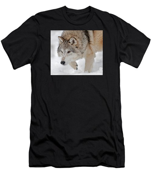 Prowling Wolf Men's T-Shirt (Athletic Fit)