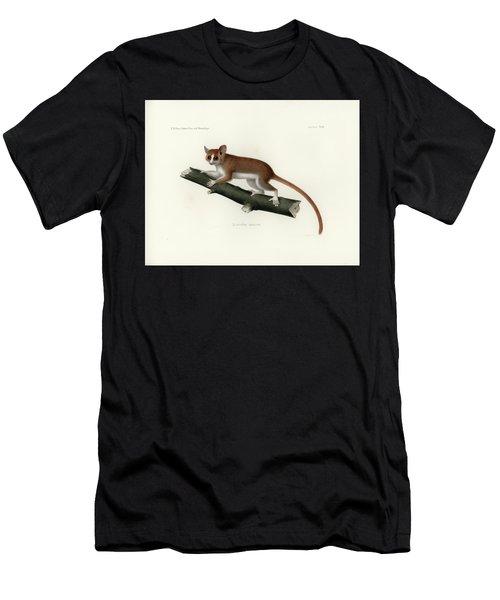 Pygmy Mouse Lemur Men's T-Shirt (Athletic Fit)