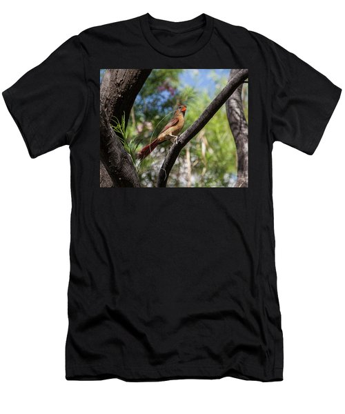 Pyrrhuloxia At Work Men's T-Shirt (Athletic Fit)