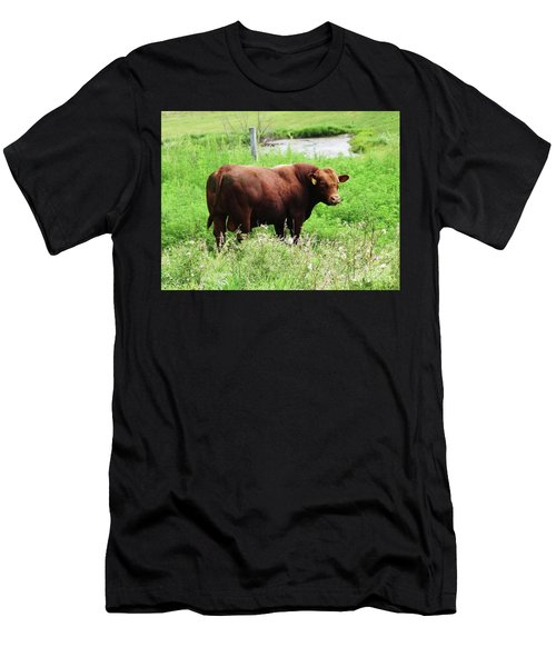 Red Angus Bull Men's T-Shirt (Athletic Fit)