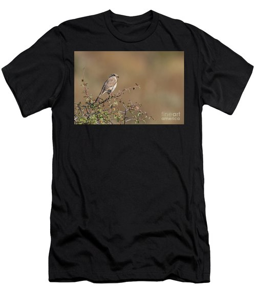 Red-backed Shrike Juv. - Lanius Collurio Men's T-Shirt (Athletic Fit)