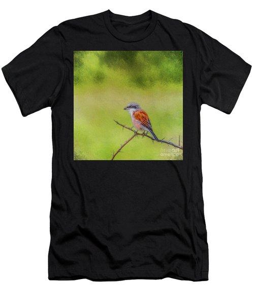 Red-backed Shrike Men's T-Shirt (Athletic Fit)