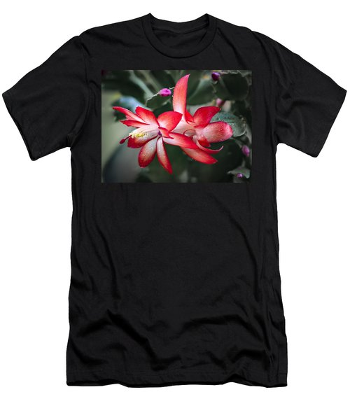 Red Christmas Cactus Men's T-Shirt (Athletic Fit)