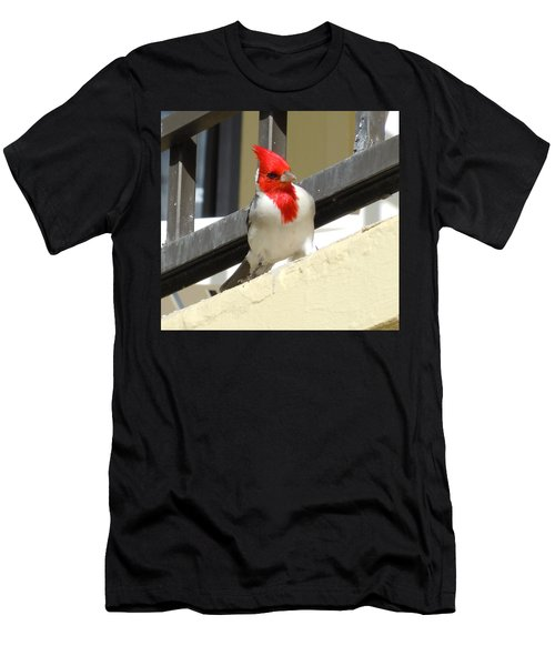 Red-crested Cardinal Posing On The Balcony Men's T-Shirt (Athletic Fit)