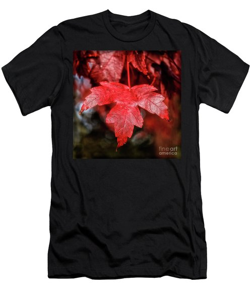 Red Leaf Men's T-Shirt (Slim Fit) by Robert Bales