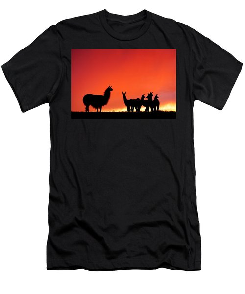 Red Llama Sunset 2 Men's T-Shirt (Athletic Fit)