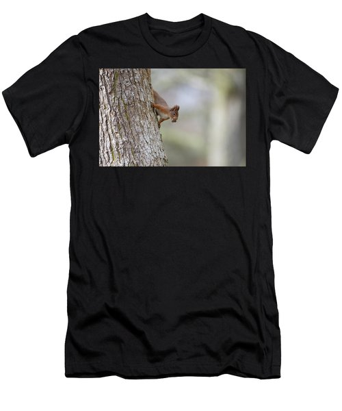 Red Squirrel Climbing Down A Tree Men's T-Shirt (Athletic Fit)