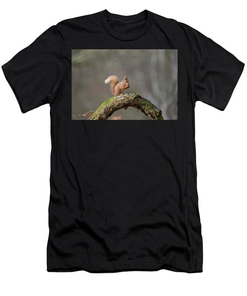 Red Squirrel Eating A Hazelnut Men's T-Shirt (Athletic Fit)