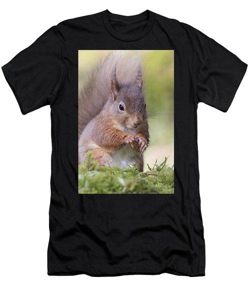 Red Squirrel - Scottish Highlands #1 Men's T-Shirt (Athletic Fit)