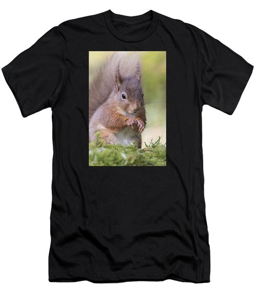 Red Squirrel - Scottish Highlands #1 Men's T-Shirt (Athletic Fit)