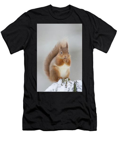 Red Squirrel Nibbling A Hazelnut In The Snow Men's T-Shirt (Athletic Fit)