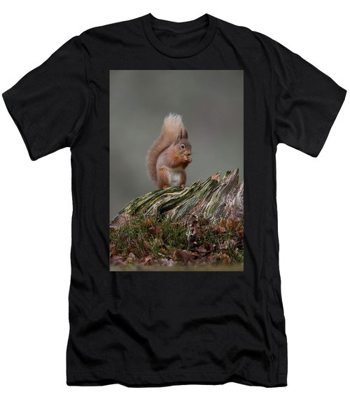 Red Squirrel Nibbling A Nut Men's T-Shirt (Athletic Fit)