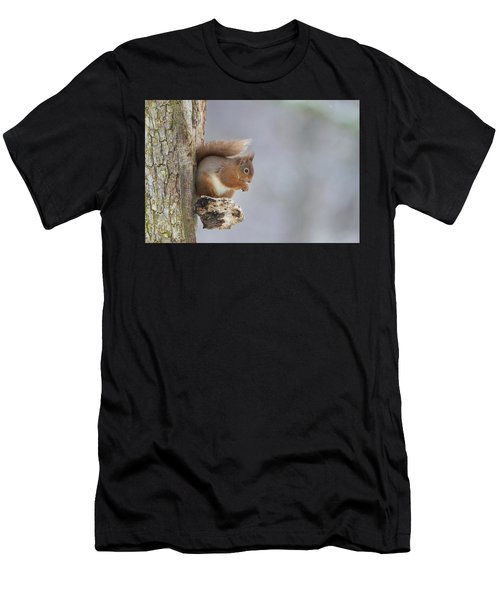 Red Squirrel On Tree Fungus Men's T-Shirt (Athletic Fit)