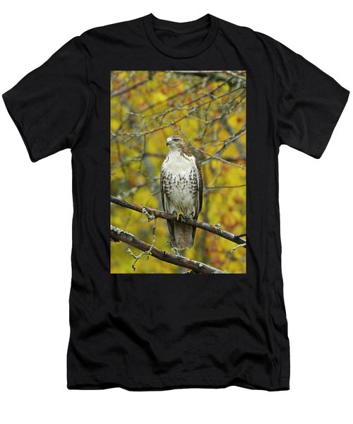 Red Tail Hawk 9888 Men's T-Shirt (Athletic Fit)