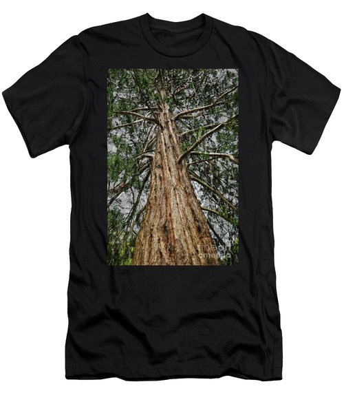Redwood Reaches For The Sky Men's T-Shirt (Athletic Fit)