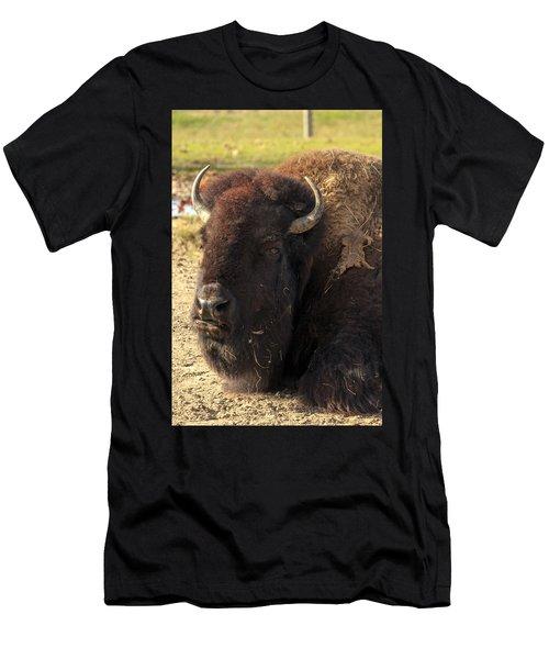 Resting Buffalo Men's T-Shirt (Athletic Fit)