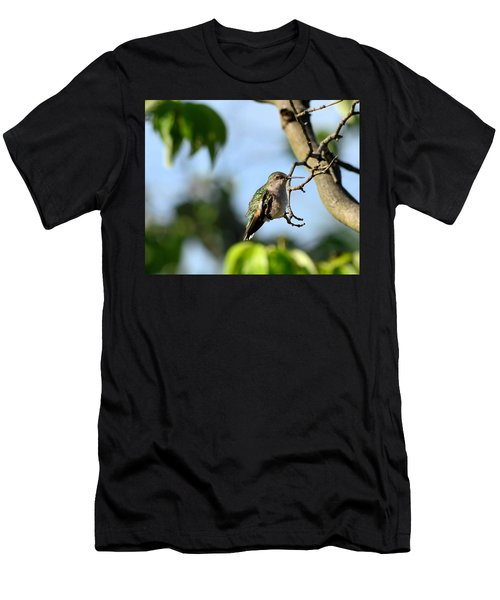Resting Hummingbird Men's T-Shirt (Athletic Fit)
