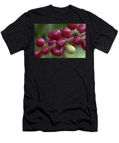 Ripe Kona Coffee Cherries Men's T-Shirt (Athletic Fit)