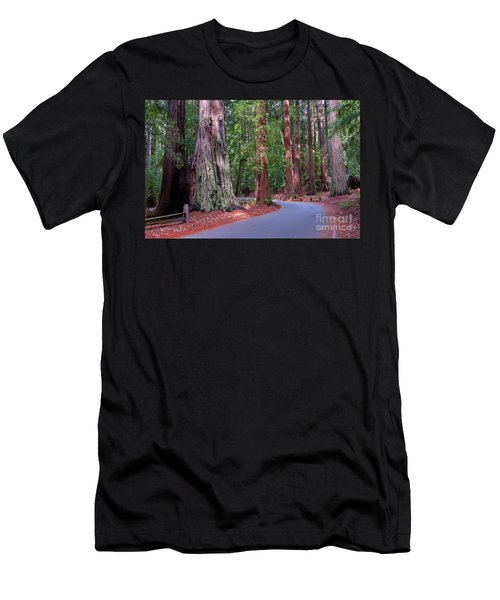 Road Through Redwood Grove Men's T-Shirt (Athletic Fit)
