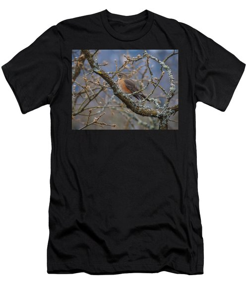 Robin In A Tree Men's T-Shirt (Athletic Fit)