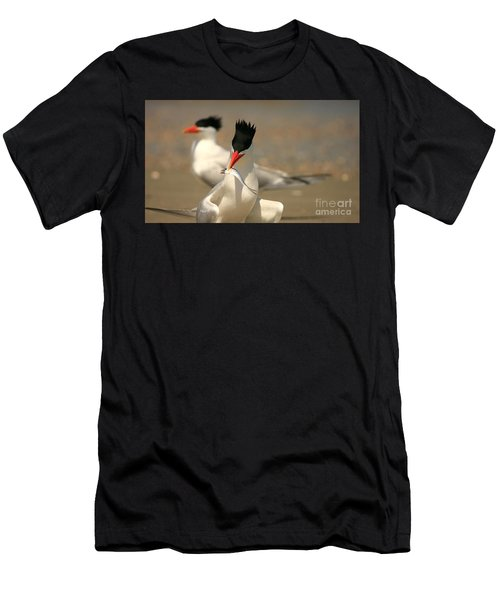 Royal Tern Catch Men's T-Shirt (Athletic Fit)
