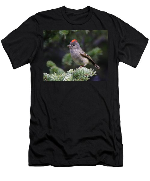 Rubycrowned Kinglet Men's T-Shirt (Athletic Fit)