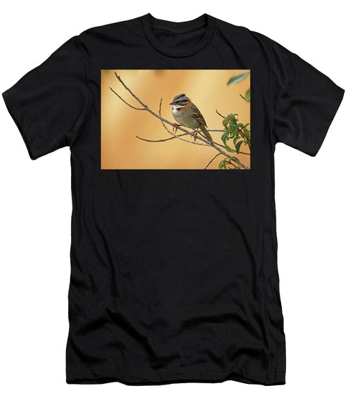 Rufous-collared Sparrow Men's T-Shirt (Athletic Fit)