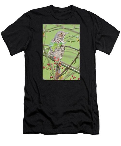 Sage Thrasher Men's T-Shirt (Athletic Fit)