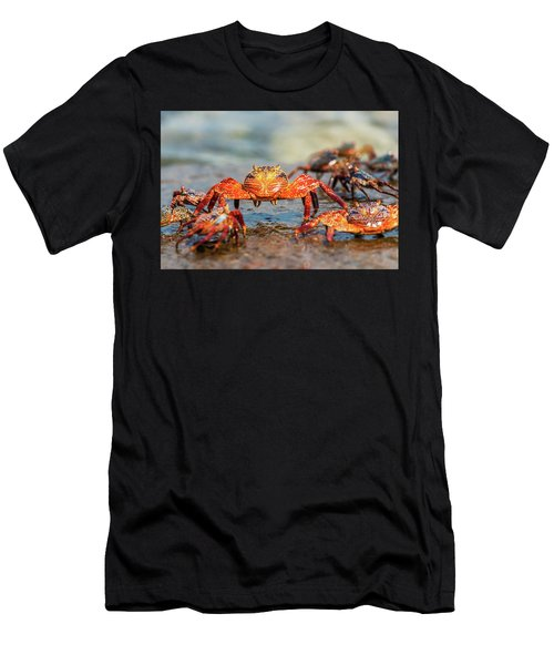 Sally Lightfoot Crab On Galapagos Islands Men's T-Shirt (Athletic Fit)