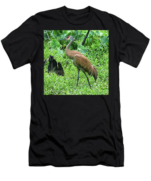Sandhill Crane At Sandy Ridge Reservation Men's T-Shirt (Athletic Fit)